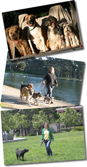 Three pictures of Carla walking dogs